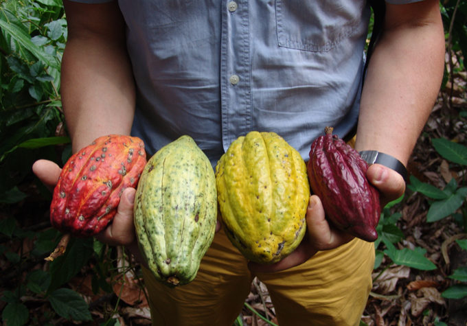 cru-virunga-cacao-is-full-of-distinct-flavours-and-characteristics-of-origin_2567408971_o
